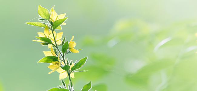 Plantes & Animaux